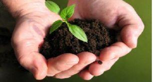 نبذة عن تخصص الهندسة الزراعية