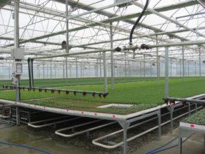 طرق انتاج الشتلات الزراعية