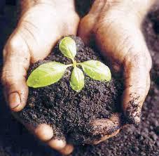 الزراعة العضوية