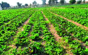 أساسيات الزراعة