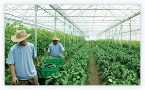 المغذيات النباتية في نظم الزراعة العضوية
