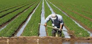 عمليات الخدمة المعتمدة في الزراعة العضوية ونظام إعطاء الشهادات