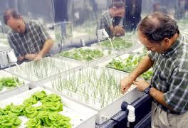 الأنظمة الزراعية و الزراعة بدون تربة