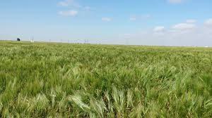 الإنتاج الزراعي