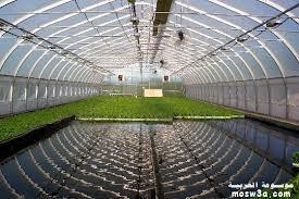 المزارع المائية