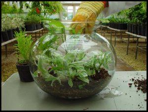 الحدائق الزجاجية