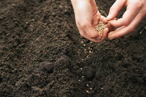 زراعة البذور