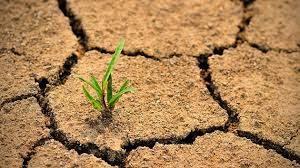 التحلل في التربة