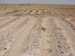 الأراضي الصحراوية