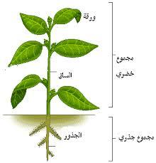 النبات