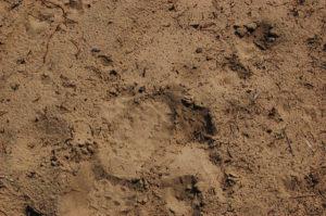 التربة الرملية