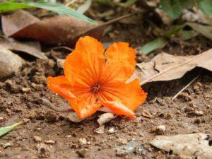 المواد العضوية في التربة