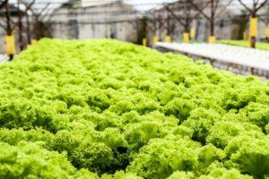 الزراعة خارج التربة