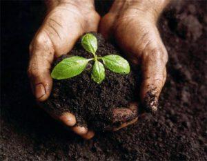 handssoilplant